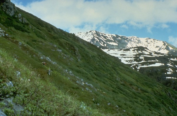 Climbing heather slopes toward Wild Horse Pass